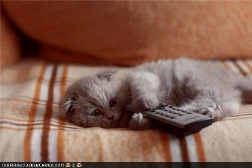 blanket couch cyoot kitteh of teh day remote remote control TV - 4304722432