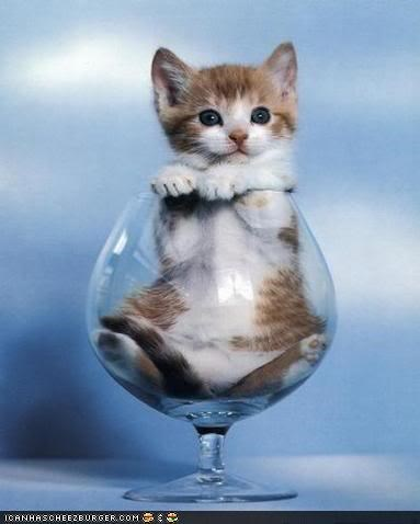 champagne cyoot kitteh of teh day drinking glass holidays new years - 4304722944