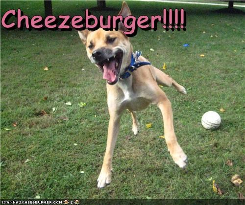Cheezburger Image 4304740608