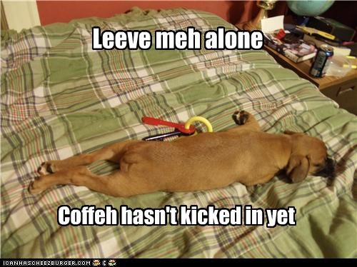 boxer coffee effects Hall of Fame kicking in leave me alone morning not yet puppy sleeping sleepy tired - 4304769280