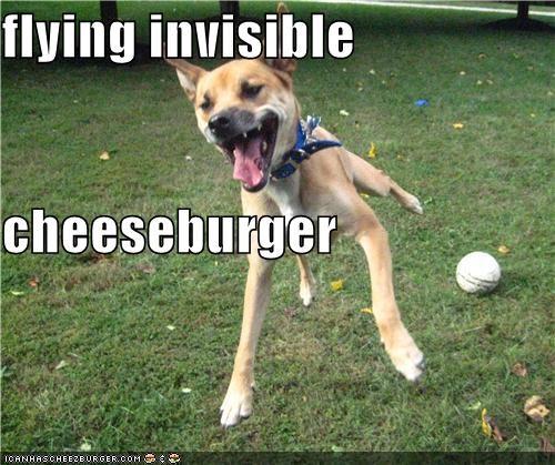 Cheezburger Image 4305624320