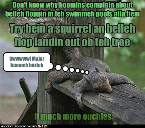 Don't know why hoomins complain about belleh floppin in teh swimmeh pools alla tiem It much more ouchies Try bein a squirrel an belleh flop landin out ob teh tree Owwwww! Major tummeh hurteh