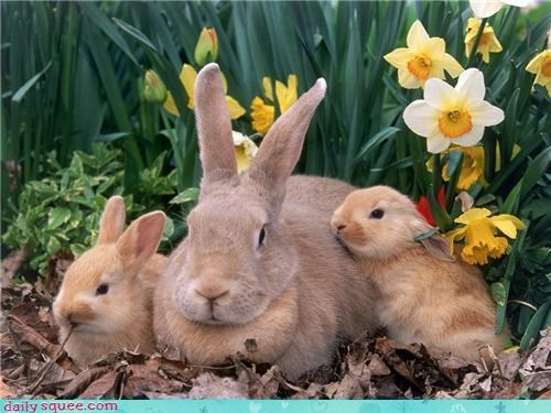 baby daffodils flowers happy bunday mommy - 4306555904