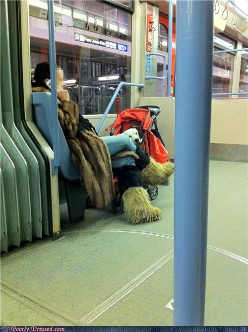 boots coat dogs fur jeans public transportation