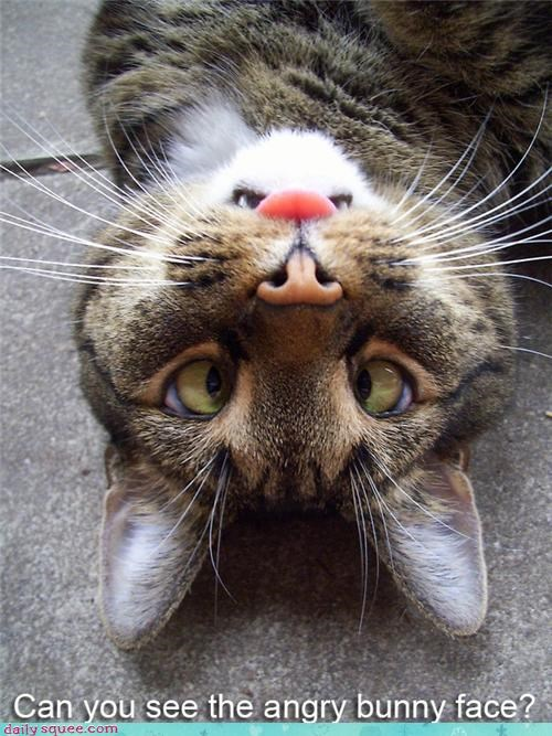 bunny cat cute face illusion - 4306749696