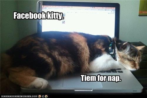 Facebook kitty. Tiem for nap.