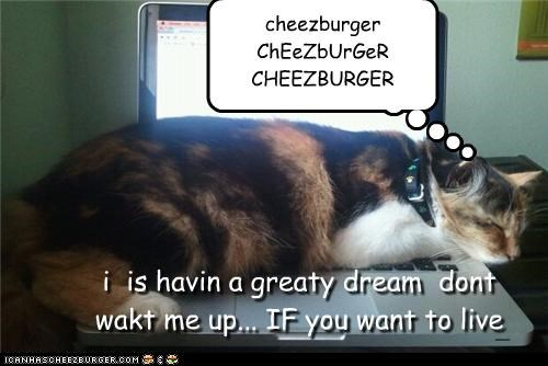 Cheezburger Image 4306839040