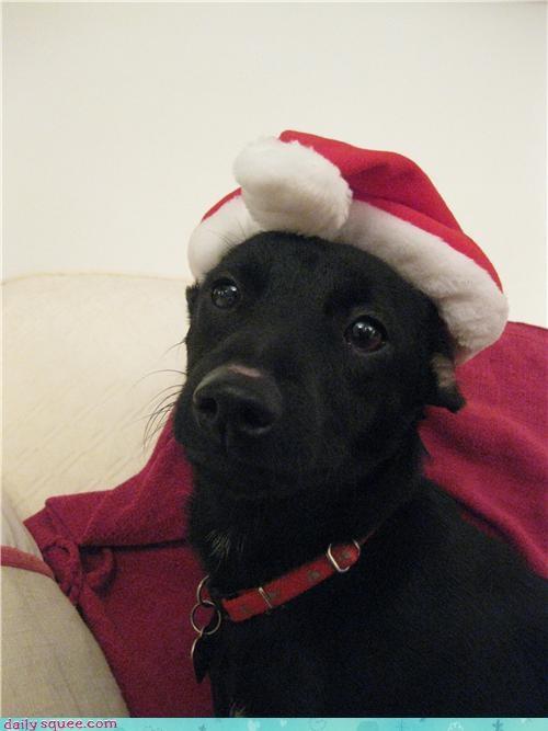 cute dogs puppy user pet - 4306898432