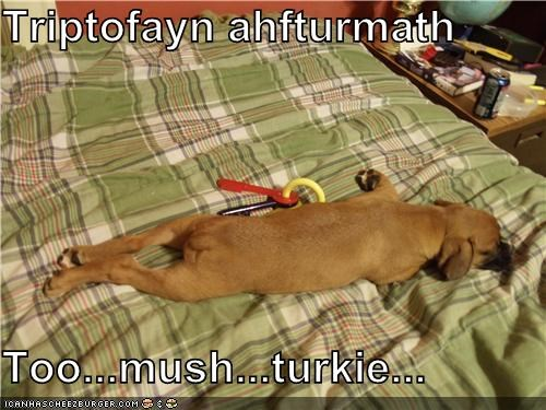 Cheezburger Image 4307094272
