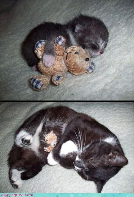 cat kitten now old then - 4307498240