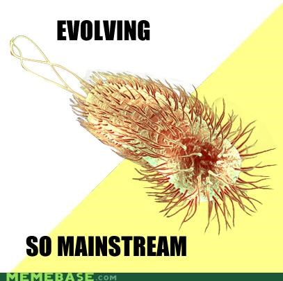 evolution flagellum Hipster Kitty mainstream - 4307975936