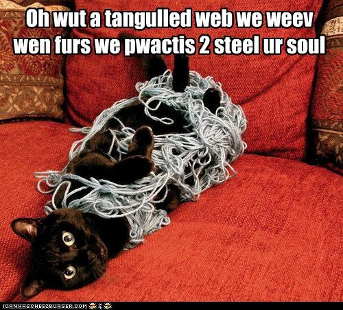 basement cat caption captioned poetry sir walter scott soul tangle tangled web yarn - 4308853760