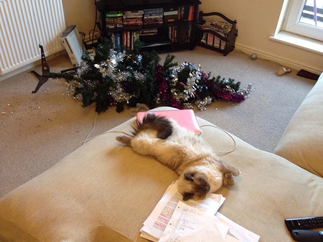 animals ruining Christmas