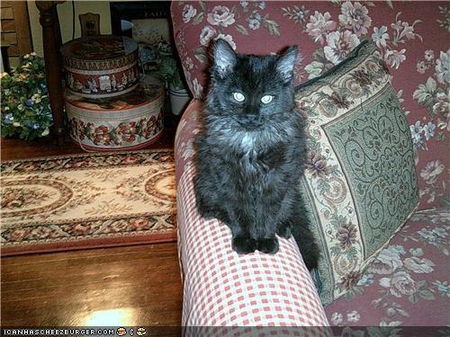 Cat - ICANHASCHEE2BURGER GcoM