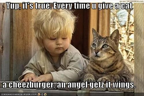 Cheezburger Image 430954240