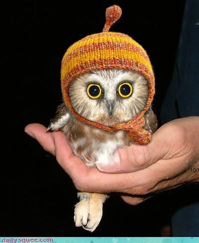 cute hat Owl