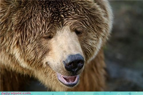 bear cute face smile