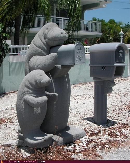 animals,art,cute,mail box,manatee,Sea Cow,stature,wtf