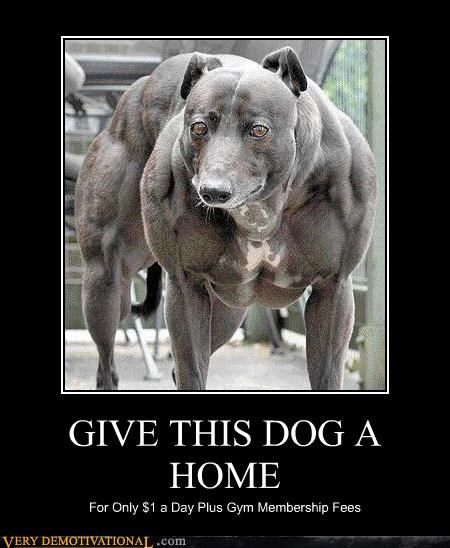 wtf gym muscles dogs