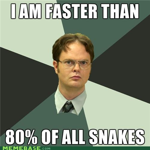 dwight schrute,Memes,snakes,the office