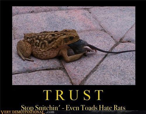 rats,wtf,toad,trust