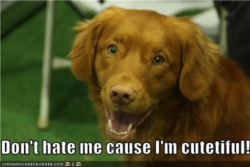 beautiful cute cutetiful dont goldren retriever hate me neologism puppy - 4310990336