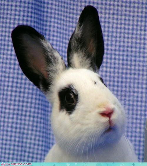 bunny,ears,happy bunday,rabbit,spot