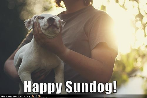 forced,happy,happy sundog,pit bull,pitbull,puppy,smiling,Sundog