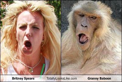 britney spears expression monkey singer - 4313736192