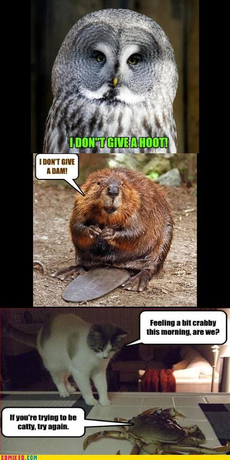 animals beaver critters cute lol Owl puns - 4314163200