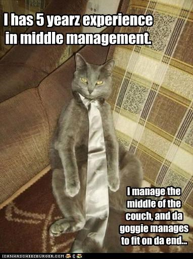 5,5 years,caption,captioned,cat,couch,experience,goggie,management,middle,middle management,pun,tie,years
