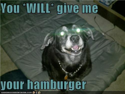 Cheezburger Image 4314746112