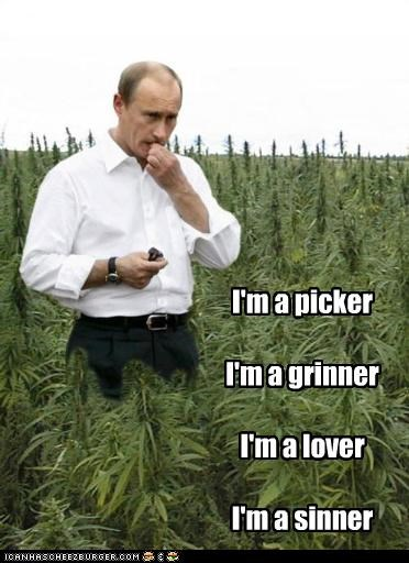 drugs,lyrics,marijuana,pot,russia,song,steve miller band,the joker,Vladimir Putin,vladurday