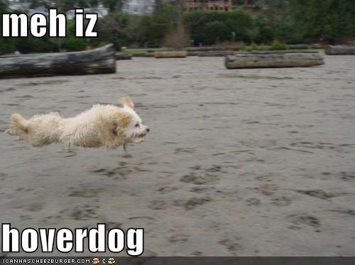 Cheezburger Image 4315647232