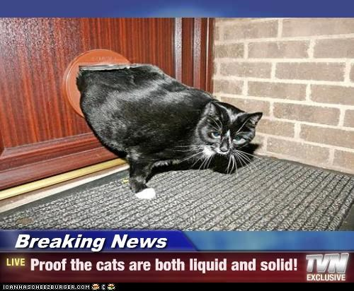 Breaking News,caption,captioned,cat,door,hole,liquid,news,proof,solid,squeezing