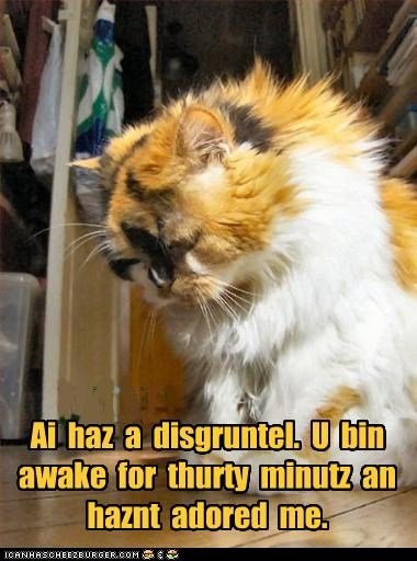 30 minutes adoration adored awake caption captioned cat center of attention disgruntled do want i has impatient