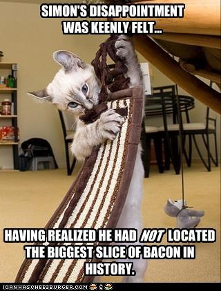 bacon caption captioned cat disappointment fabric FAIL felt realization resemblance - 4319021568