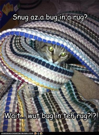 Cheezburger Image 4319111936