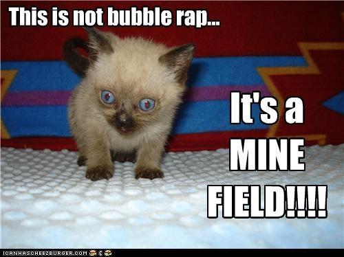 afraid bubble wrap caption captioned cat fear kitten mine mine field realization siamese - 4319470080