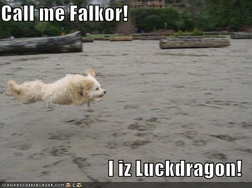 call me dragon falkor flight flying Hall of Fame hoverdog luck luck dragon mixed breed name sheepdog