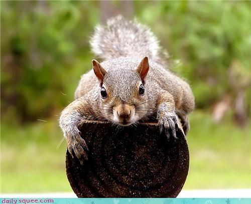 cute noms squirrel watch - 4320124928