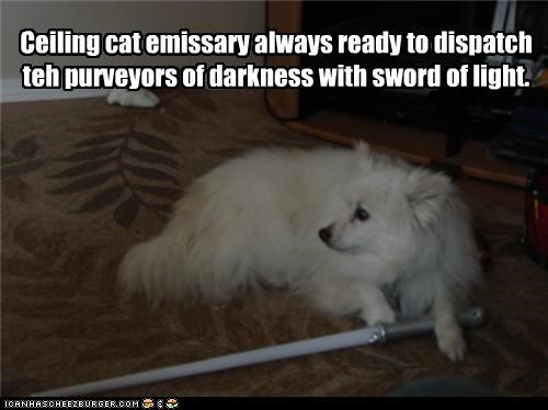 ceiling cat,ceiling dog,darkness,defender,emissary,fighter,fighting,lightsaber,mixed breed,pomeranian,sword,white