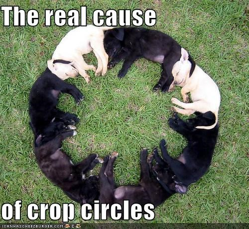 cause,circles,crop,crop circles,Hall of Fame,labrador,puppies,puppy,real,sleeping