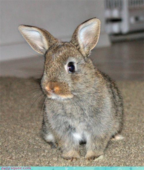 bunny bunny foofoo cute ears happy bunday - 4321228288