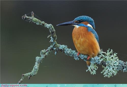 bird colorful cute pretty - 4321237248