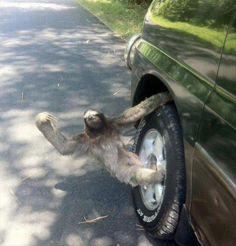 photos weird animals - 4322309
