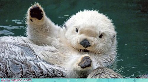 swimming,otters,squee,if you're happy and you k