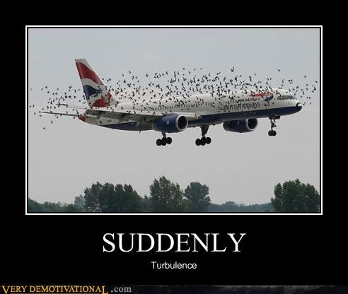 airlines airplanes birds suddenly turbulence wtf