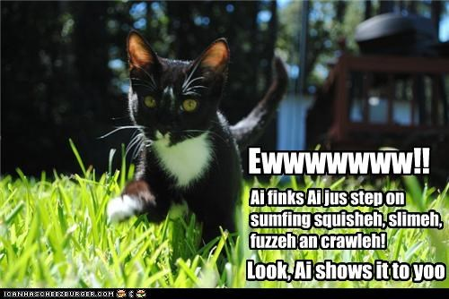 caption captioned cat displeased do not want eww gross icky showing something squishy stepped - 4323003904