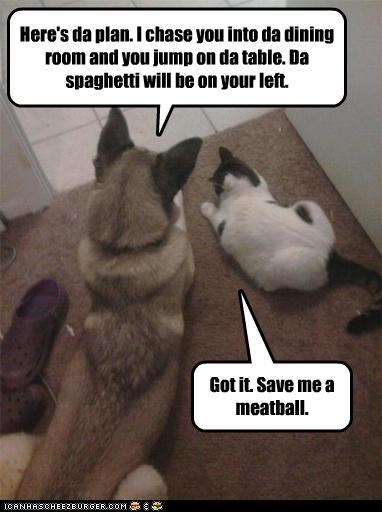 accident,attack,cat,crime,dinner,food,husky,meatball,noms,plan,plot,scheming,spaghetti,staged,stealing,table,teamwork